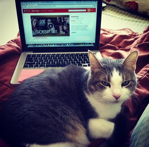 cat gossip girl netflix image