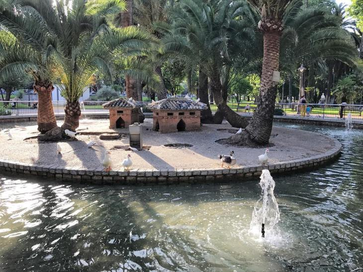 ducks in pond - things to do in Cordoba